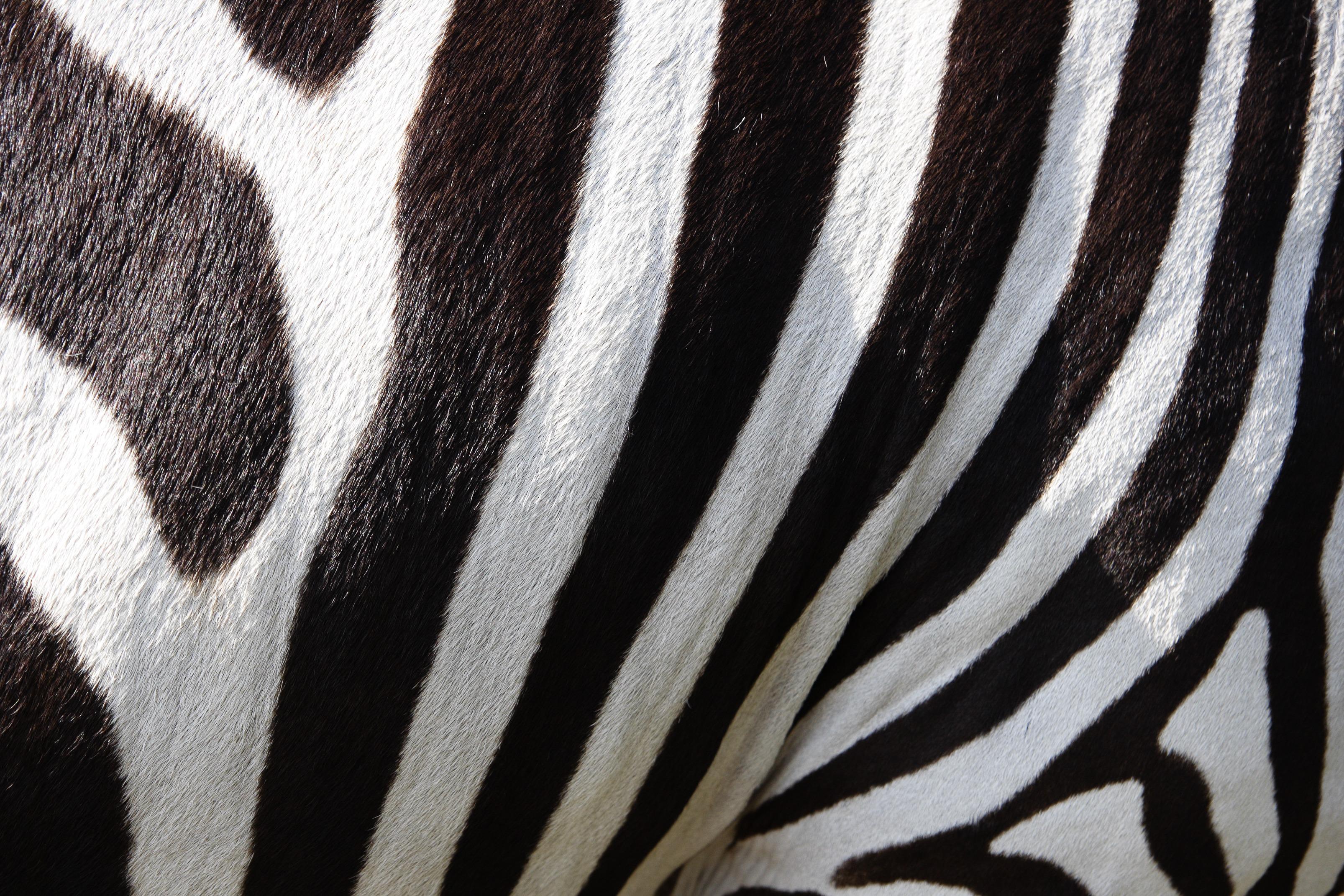 zebra_kontiki_brand_juventus
